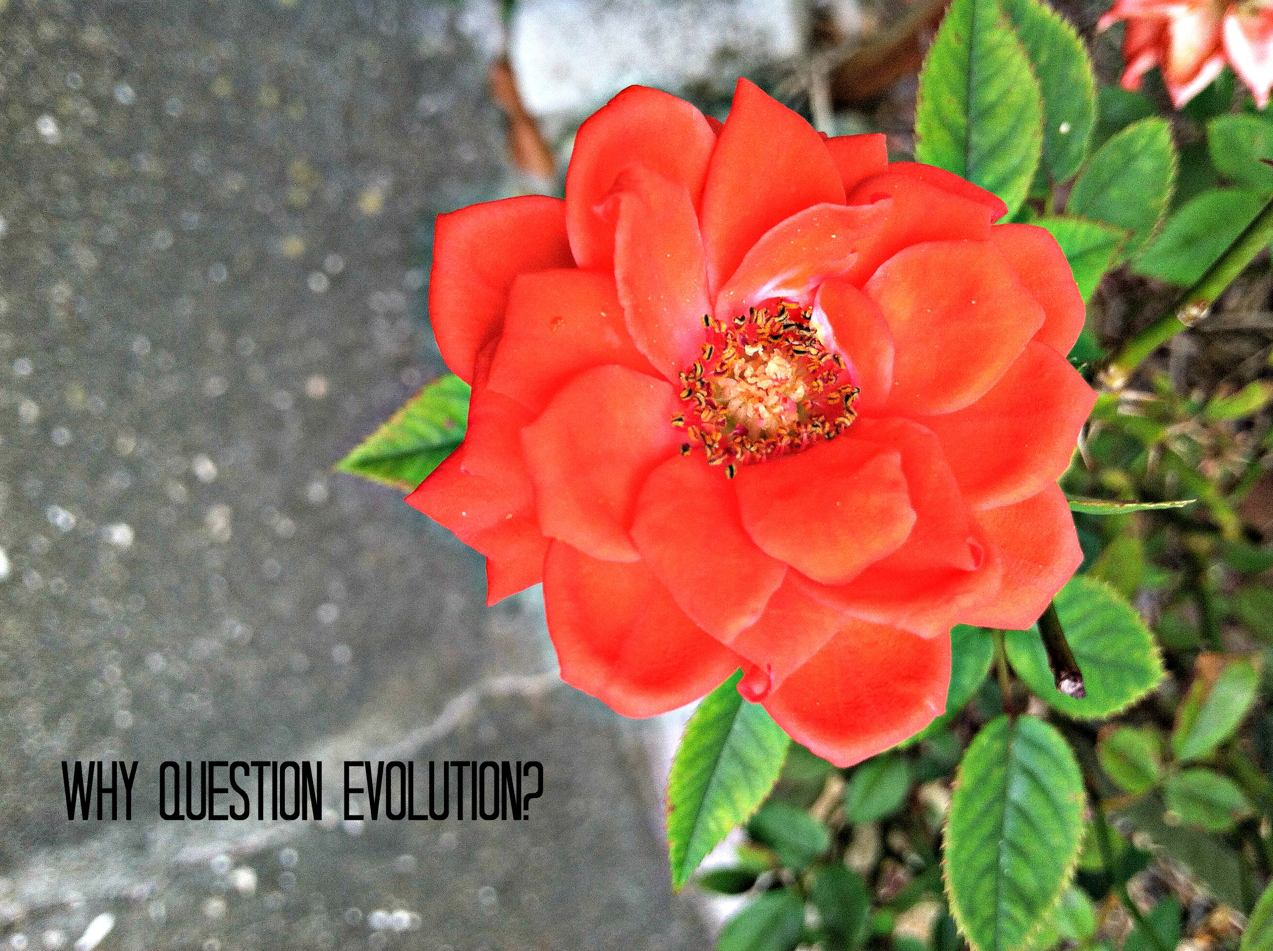 Why Question Evolution